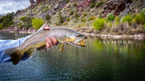 Speckled Trout Jigsaw Puzzle