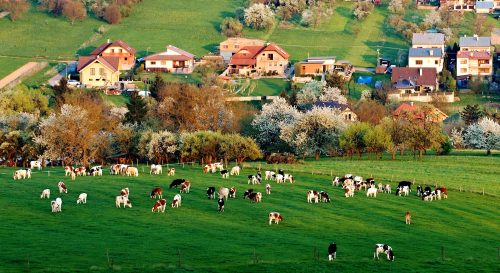 Spring Grazing Jigsaw Puzzle