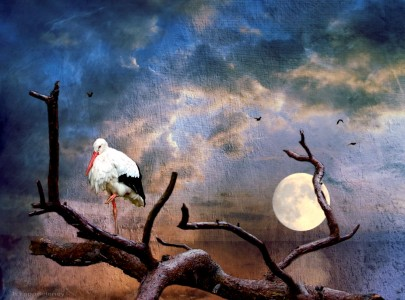 Stork and Moon Jigsaw Puzzle