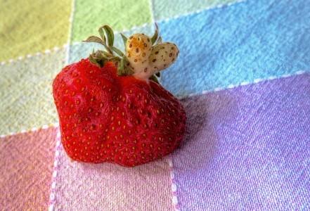 Strawberry Jigsaw Puzzle