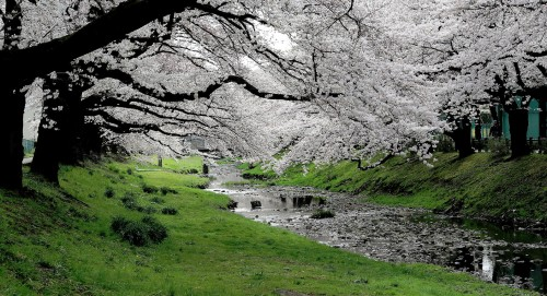 Stream Bank Blossoms Jigsaw Puzzle