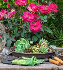 Succulents and Roses Jigsaw Puzzle