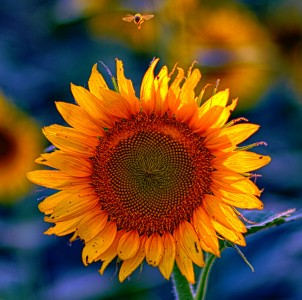 Sunflower and Bee Jigsaw Puzzle