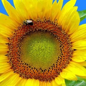 Sunflower and Bumble Bee Jigsaw Puzzle