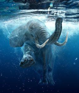 Swimming Elephant Jigsaw Puzzle