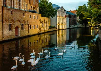 Swimming Swans Jigsaw Puzzle