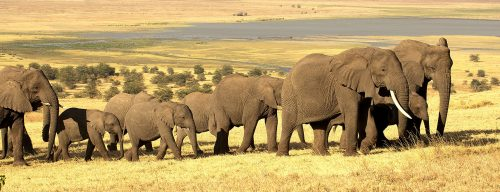 Tanzania Elephants Jigsaw Puzzle