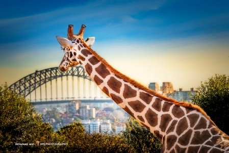 Taronga Zoo Jigsaw Puzzle