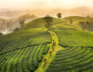 Tea Hill Jigsaw Puzzle