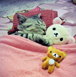 Teddy Bears and Cat Jigsaw Puzzle