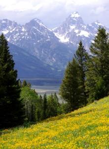 Teton Meadow Jigsaw Puzzle