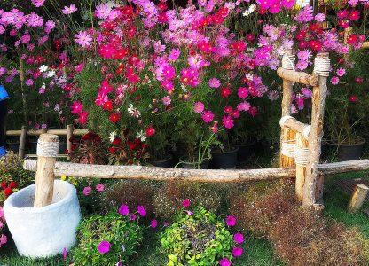 Thai Flower Garden Jigsaw Puzzle