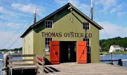 Thomas Oyster