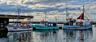 Three Docked Boats