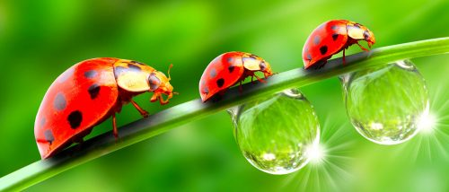 Three Ladybugs Jigsaw Puzzle