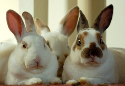 Three Rabbits Jigsaw Puzzle