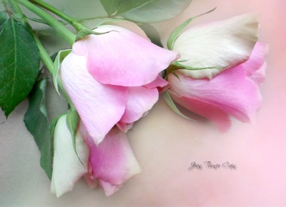 Three Roses Jigsaw Puzzle