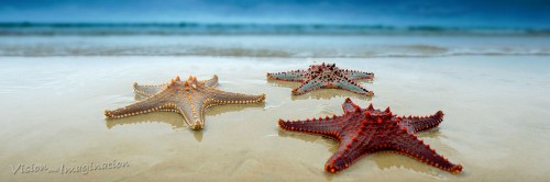 Three Starfish Jigsaw Puzzle