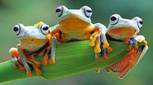 Three Tree Frogs Jigsaw Puzzle