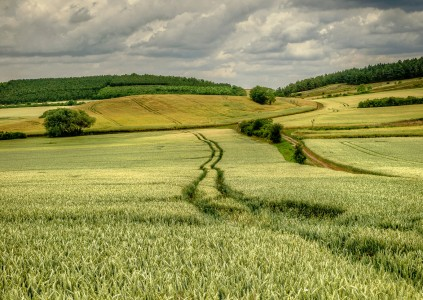 Through the Field Jigsaw Puzzle