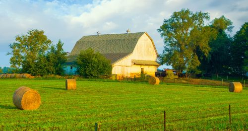 Tipton County Barn Jigsaw Puzzle