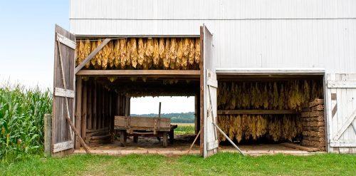 Tobacco Drying Barn Jigsaw Puzzle