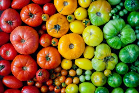 Tomato Colors Jigsaw Puzzle