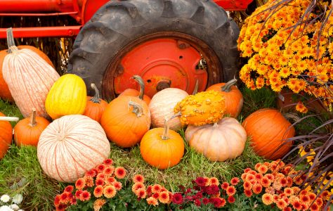 Tractor and Pumpkins Jigsaw Puzzle