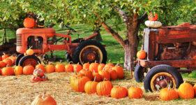 Tractors and Pumpkins