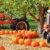 Tractors and Pumpkins Jigsaw Puzzle