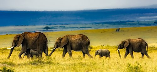 Traveling Elephants Jigsaw Puzzle
