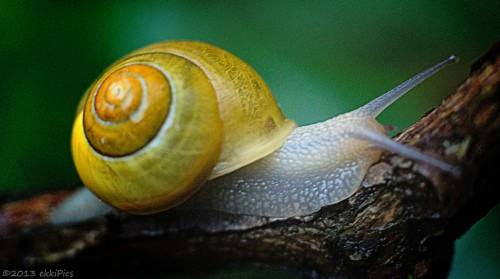 Traveling Snail Jigsaw Puzzle