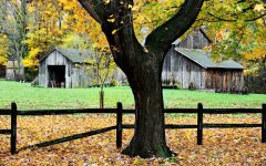 Tree and Barn