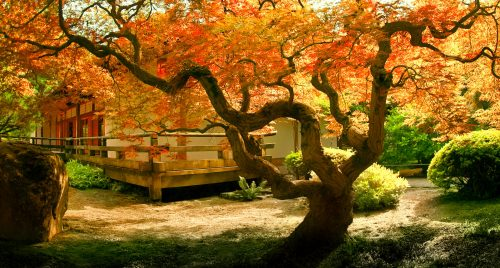 Tree and Tea House Jigsaw Puzzle