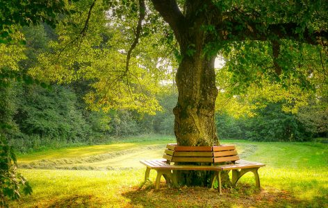 Tree Bench Jigsaw Puzzle
