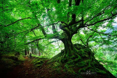 Tree Roots Jigsaw Puzzle