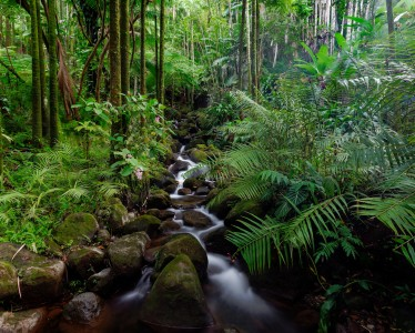 Tropical Stream Jigsaw Puzzle