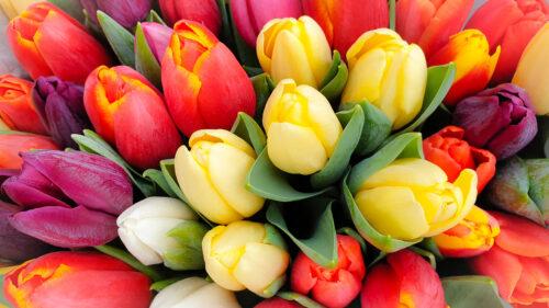 Tulip Bunch Jigsaw Puzzle