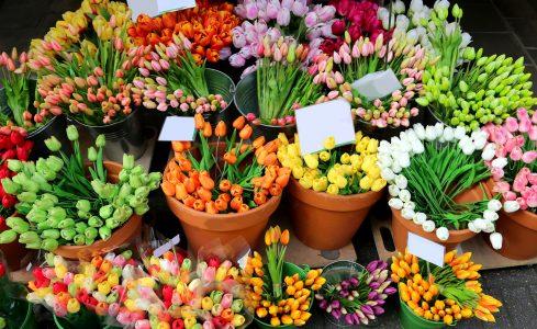 Tulip Colors Jigsaw Puzzle