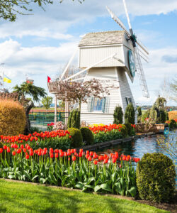 Tulip Town Jigsaw Puzzle