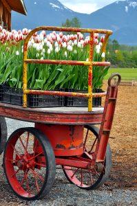 Tulip Wagon Jigsaw Puzzle