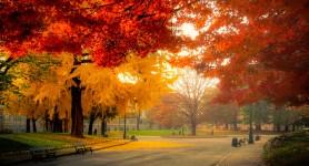 Turin Autumn