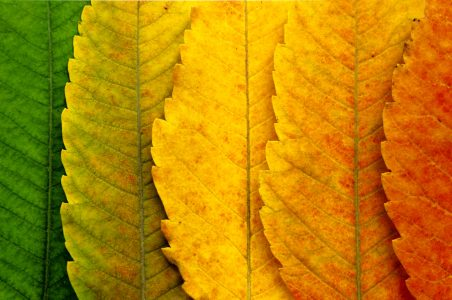 Turning Leaves Jigsaw Puzzle