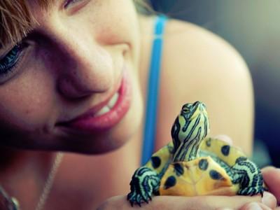 Turtle Buddy Jigsaw Puzzle