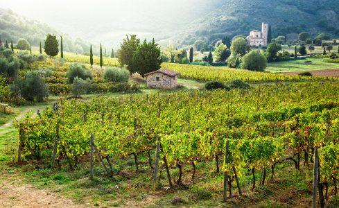 Tuscany Vineyard Jigsaw Puzzle
