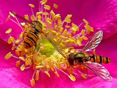 Two Bees Jigsaw Puzzle