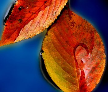 Two Fall Leaves Jigsaw Puzzle