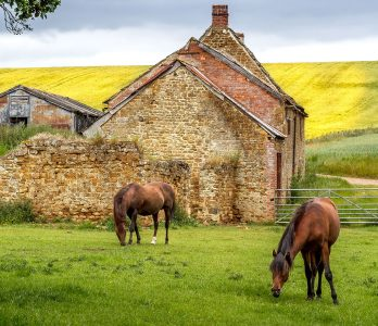 Two Grazing Horses Jigsaw Puzzle