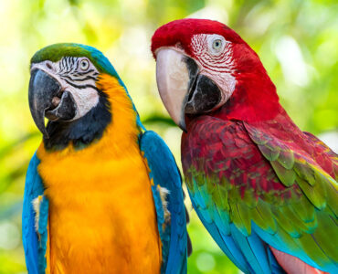 Two Macaws Jigsaw Puzzle