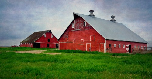 Two Red Barns Jigsaw Puzzle